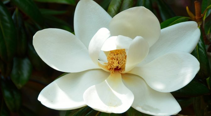 Spring Comes to Tonawanda Street <br /><small>by Sandra Kohler</small>
