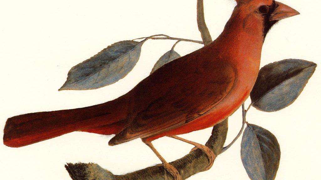 le-cardinal-ruppe-de-buffon-chute-de-lohio-1024