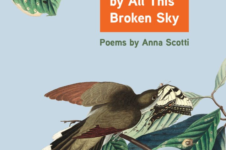 Bewildered by All This Broken Sky